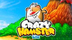 Crazy hamster
