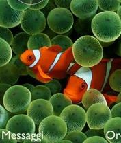 CLOWN FISH Theme