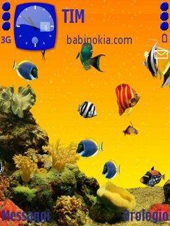 Acquario By Babi
