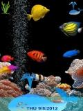 animated aquarium....