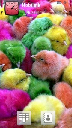 Colourful Chicks