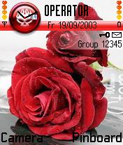 Fkr Rose