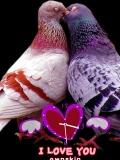 love bird....