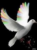 nice pigeon.....