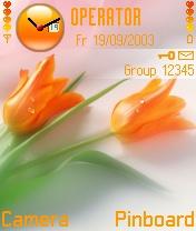 Orenge Tulips