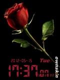 red _Rose