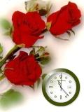 red rose.....