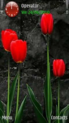 Red Tulips Hd