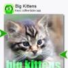 Big Kittens (Keys) for Symbian