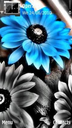 Tirkuaz Flowers