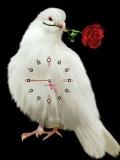 white bird.....
